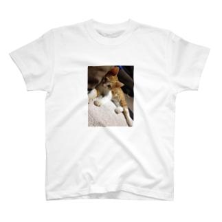 生後半年のぽてとさん☆ T-shirts
