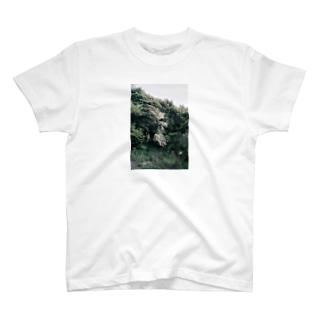 harucamera 解体 T-shirts