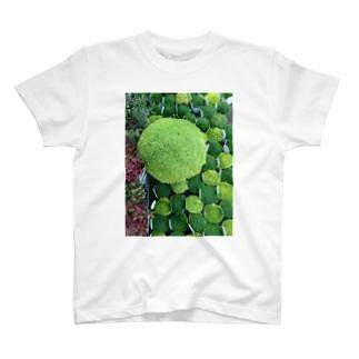 moss farm T-shirts