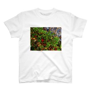 秋の水辺 DATA_P_145 T-shirts