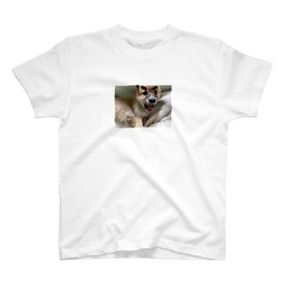 眉毛子虎です T-shirts