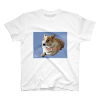 コーギーTシャツ T-shirts
