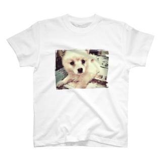 ポメラニアンに見えないポン太 赤ちゃん T-shirts