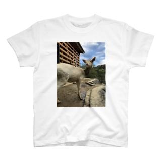 アニマルシリーズ T-shirts