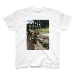 タイガーシリーズ T-shirts