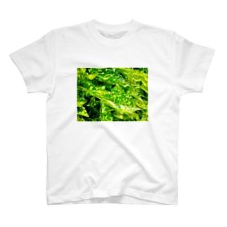 AOKI01 T-shirts