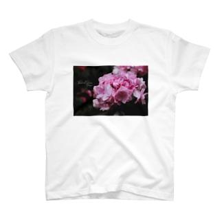 【花途夢】紫陽花 ph data./2020.5.19 T-shirts