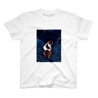 猫柄の猫の写真 T-shirts