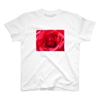 pink rose T-shirts