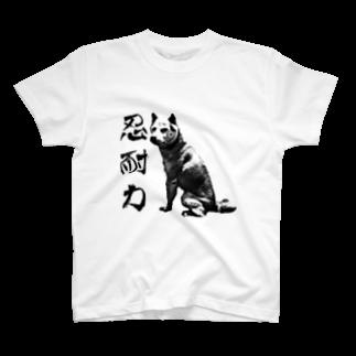 断然犬派の柴犬道「忍耐力」 T-shirts