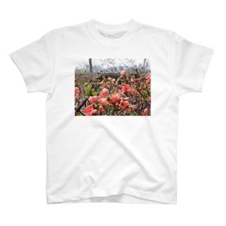 ボケの花と風景 T-shirts