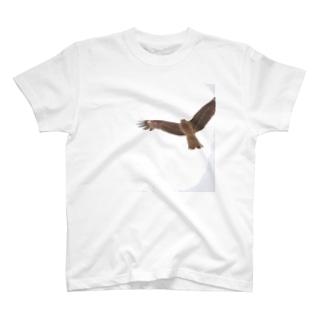 トンビが狙う T-shirts