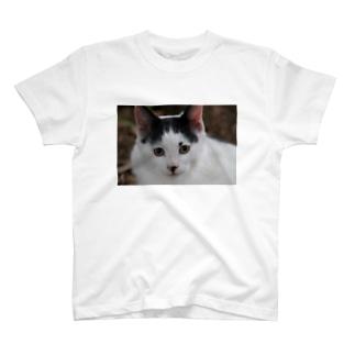 コッシー君正面アップ T-shirts