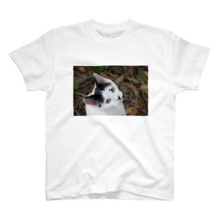 見つめているコッシー君 T-shirts