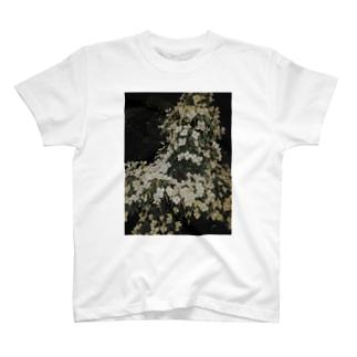 ヤマボウシ T-shirts