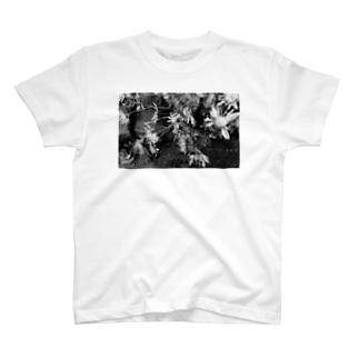 Photo 枯れた菊 T-shirts