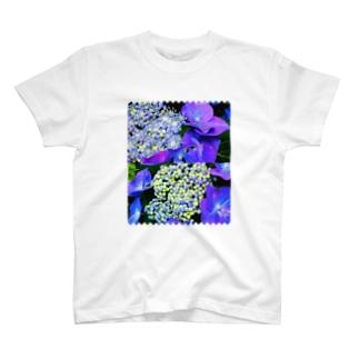 ガクアジサイの花と蕾 T-shirts