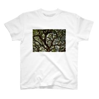 大きな木 T-shirts