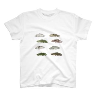ポリプテルスたち T-shirts