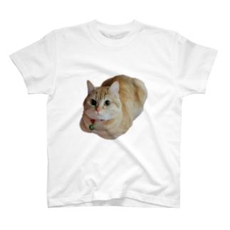 ミントの香箱座り T-shirts
