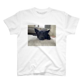 MADOROMUGI T-shirts