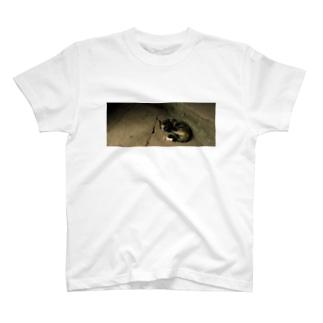 旅先pics📸のアンコールワットのネコ T-shirts
