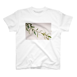 Branch T-shirts