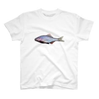ヤリタナゴ(滋賀県産) T-shirts