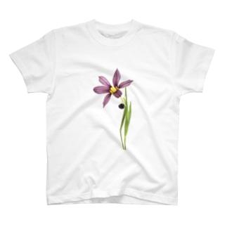 庭石菖/ニワゼキショウ T-shirts