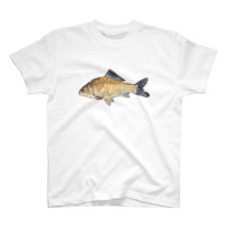 みなたびのフナ類(福井県産) T-shirts