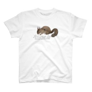動物図鑑 ニホンリス (大きめ) T-shirts