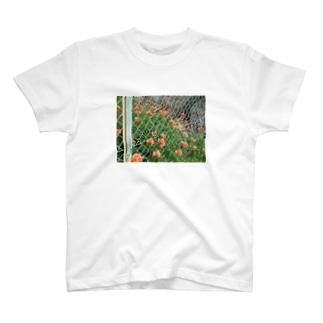 ひなげし T-shirts