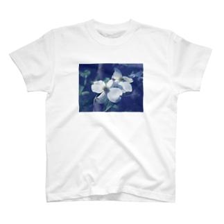 ハナミズキTシャツ T-shirts