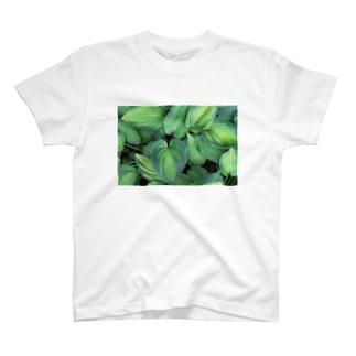 ボタニカルデザイン T-shirts