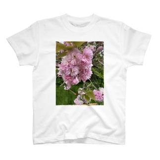 kawachu5の桜 T-shirts
