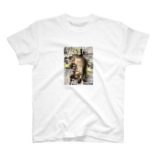仔猫のtiro  T-shirts