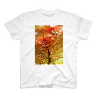 水草の気泡 T-shirts
