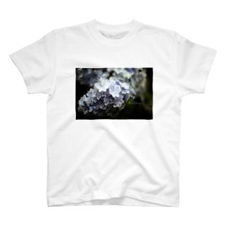 EViLの【花途夢】紫陽花 ph data./2020.6.14 T-shirts