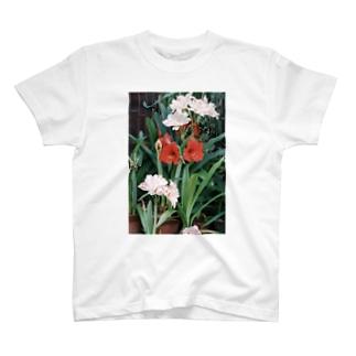 harucameraのharucamera  ユリ T-shirts