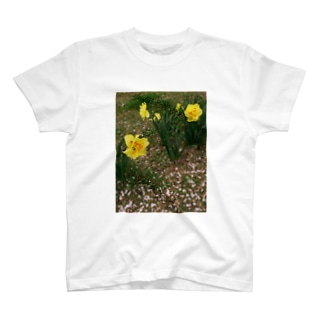 散るモノと今咲く者 DATA_P_147 水仙と桜の花びら T-shirts