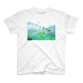 淡緑の潤い Tシャツ