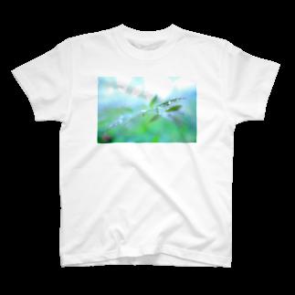 M.F.Photoの淡緑の潤い Tシャツ