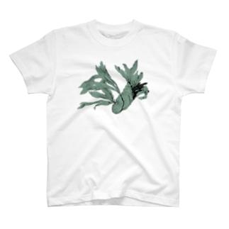 自由に育つビカクシダ T-shirts