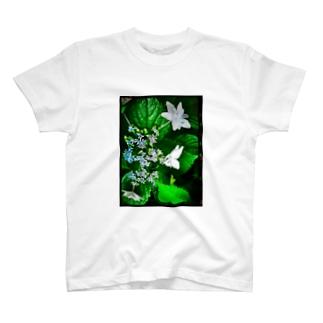 白いガクアジサイ 青み T-shirts