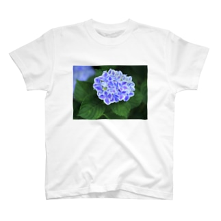 ミシンベアのブルーなアジサイ T-shirts