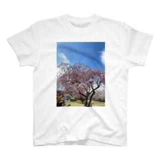 Okaza-kiokaのさくら T-shirts