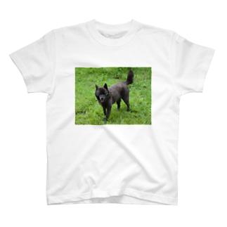 甲斐犬もも T-shirts