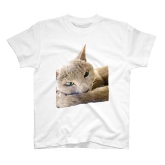 こはくさん/アンニュイ写真 T-shirts