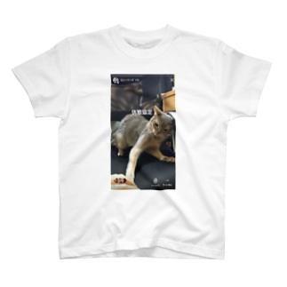 休戦協定 猫 T-shirts