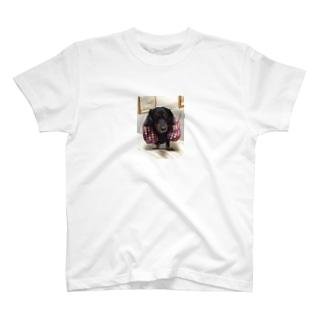 BECK T-shirts
